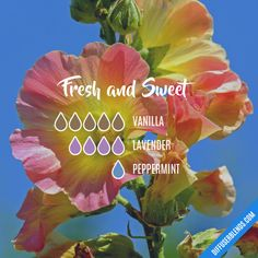 Fresh and Sweet - Essential Oil Diffuser Blend