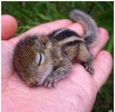 Just a baby squirrel :) http://ift.tt/2yyVBKz