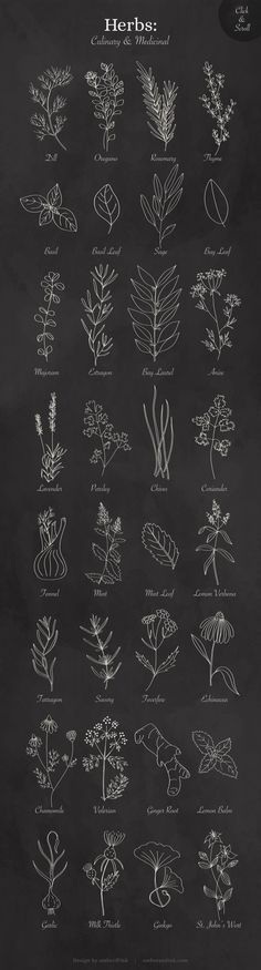 Culinary & Medicinal Herbs List of herbs included in the graphics pack: Dill Oregano Rosemary Thyme Herbs Illustration, Illustration Inspiration, Botanical Illustration, Leaf Drawing, Plant Drawing, Flower Doodles, Medicinal Herbs, Doodle Art, Line Art