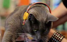 Feline Friendly Handsets - Sol Republic's X Meowingtons Headphones Are for Pets (VIDEO)