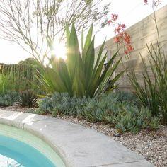 Xeric Plants along pool