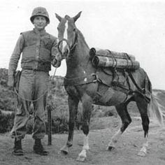 """A real 'War Horse!"""" Read the story of Reckless in the Saturday Evening Post."""