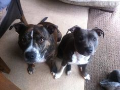 My puppy dogs....butter wouldn't melt :0)