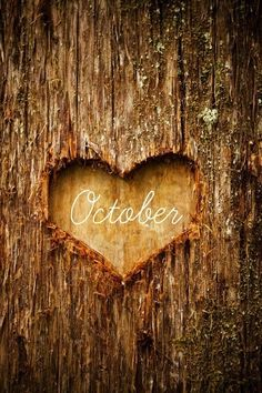"""coziness, indeed ~ """"October / And the trees are stripped bare / Of all they wear..."""""""