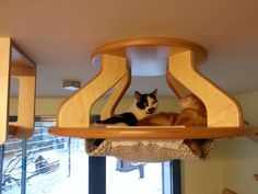 This Guy Makes The Most Awesome Feline Jungle Gym We've Ever Seen | OhGizmo!
