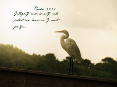 Integrity and honesty will protect me because I wait for You. ---Psalm 25:21 * Click image to enlarge.