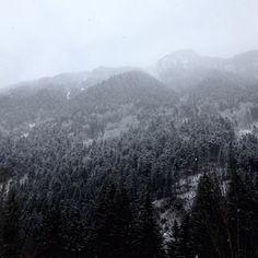 The Alpes, Austria. Photo: Karla-Therese Kjellvander  #alpes #mountains #forest