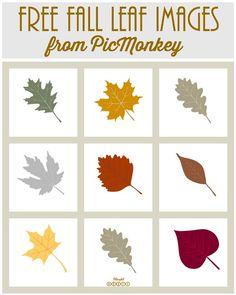 Free Fall Leaf Images from PicMonkey from Blissful Roots