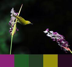 Pallets, Color Patterns, Animals, Inspiration, Art, Colors, Biblical Inspiration, Art Background, Animales