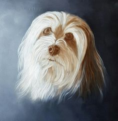 'Beertje', portrait of a Havanese.  Painted by Anne-Fieke Later