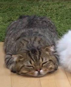 Cute Little Kittens, Cute Little Animals, Kittens Cutest, Baby Animals, Funny Animals, Kittens And Puppies, Baby Puppies, Cats And Kittens, Dumb Cats