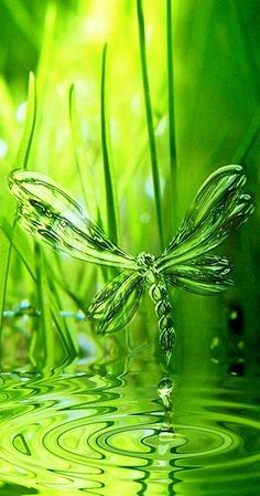 Fascinante libellule