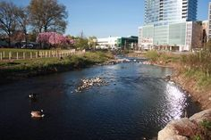 Mill-River-Park