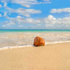 It's so easy to fall in love with the beach!