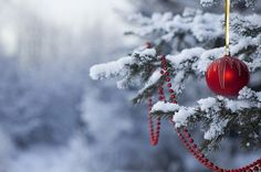 Merry Christmas Messages with Beautiful HD Images Merry Christmas Images, Christmas Messages, Christmas Pictures, Rustic Christmas, Beautiful Christmas, Winter Christmas, Christmas Time, Frozen Christmas, London Christmas
