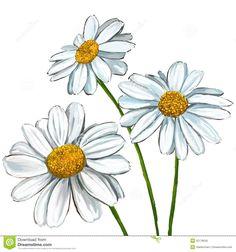 daisy sketch watercolor - Google Search