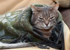 Feline Immunodeficiency Virus, or FIV, is a slow-acting virus very similar to HIV in people. Although it might take years for symptoms to present in a cat with FIV, they do have suppressed immune systems and will be much more …