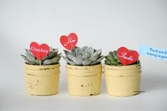 Succulent Teachers Gift or Mother's Day Gift - The Idea Room