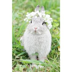 Bunnies Wearing Floral Crowns ❤ liked on Polyvore featuring accessories