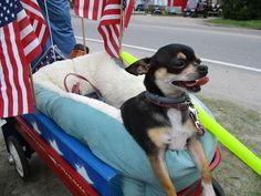 Our Family's July 4th Parade Mascot