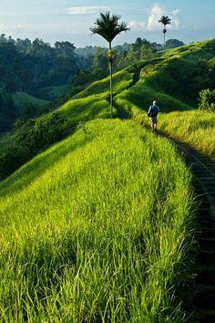 Promenade a Campuhan Ubud
