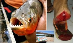 Brazil bathers savaged in a wave of piranha attacks | Daily Mail Online