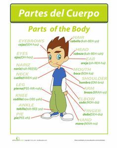 Fourth Grade Spanish Foreign Language Worksheets: Partes del Cuerpo