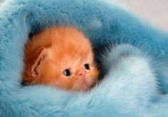 I am a cutie!  http://allwomenstalk.com/make-your-day-cutest-pets-ever/