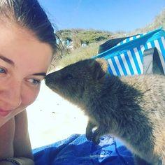 #quokka kisses at #rottnestisland #wa #australia #travelgram by lexi210990 http://ift.tt/1L5GqLp