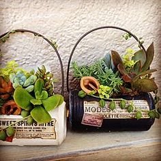 Tin Can Crafts, Diy And Crafts, Décor Antique, Tin Art, Found Object Art, Succulent Pots, Upcycled Crafts, Garden Crafts, Bottle Art