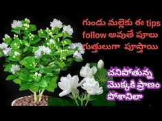 Zero Waste Management, Organic Liquid Fertilizer, Handloom Saree, Jasmine, The Creator, Planters, Flowers, Youtube, Plant