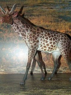 Sivatherium was a close relative of the giraffe but possessed antlers reminiscent of deer.