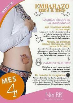 6a82c8c7e 24 mejores imágenes de Embarazo mes a mes