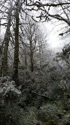 Bosque  como en blanco y negro