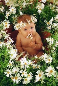 Anne Geddes Pretty, funny Baby Photos