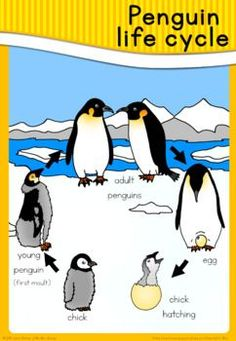Penguin life cycle poster