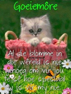Kitten on the lawn Good Morning Messages, Good Morning Good Night, Good Morning Wishes, Morning Images, Good Morning Quotes, Lekker Dag, Afrikaanse Quotes, Goeie More, Morning Inspirational Quotes