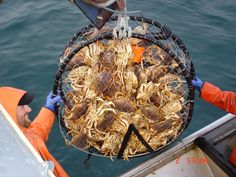 Crabbing...one of my earliest memories of the Oregon Coast