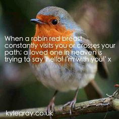 : RT When a robin red breast constantly visits u or crosses ur path,a loved one in heaven is trying to say hello I'm wit . Kyle Gray, Loved One In Heaven, Robin Redbreast, Miss You Dad, Bird Quotes, Angel Quotes, Robin Bird, Baby Robin, Thoughts