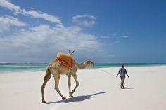 Camel walking along white sands on Diani beach , Kenya Marine National Park, National Parks, Most Beautiful Beaches, Beautiful Places, Amazing Places, Safari, Diani Beach, Mount Kenya, Marine Reserves