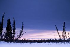 As the permafrost melts in the north, forests no longer grow straight.