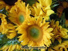Sunflowers #theflowershopfairoaks