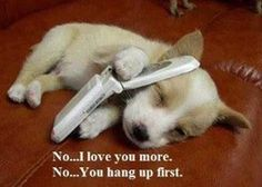 funny pictures of cute animals pictures of cats really cute cat pictures cute photography pictures funny cute pictures of babies cute . Cute Puppies, Cute Dogs, Dogs And Puppies, Baby Dogs, Baby Animals, Funny Animals, Cute Animals, Animals Images, Funny Dog Pictures