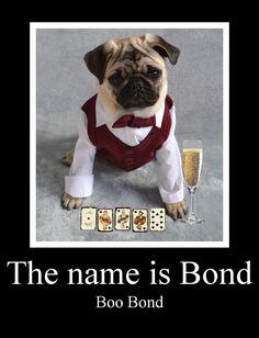Funny Pug Dog Meme LOL James Bond Parody #pug #puppy #jamesbond #dog #meme #funny #lol #cute #pets #formal #newyear