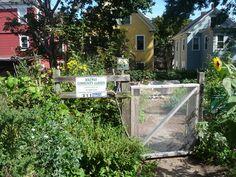 Bikeway Community Garden outside of Davis Square