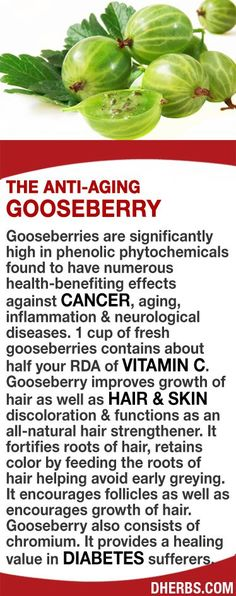 Gooseberries are significantly high in phenolic phytochemicals found to have numerous health-benefiting effects against cancer, aging & neurological diseases. The berries are high in Vitamin C. Gooseberry improves growth of hair, hair & skin discoloration & functions as an all-natural hair strengthener. It fortifies roots of hair, retains color by feeding the roots helping avoid early greying. Gooseberry also consists of chromium providing healing in diabetes sufferers. #dherbs