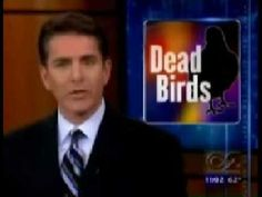 BREAKING NEWS!  BIRDS FALLING OUT OF THE SKY!  WE ARE SOOOO IN TROUBLE F...