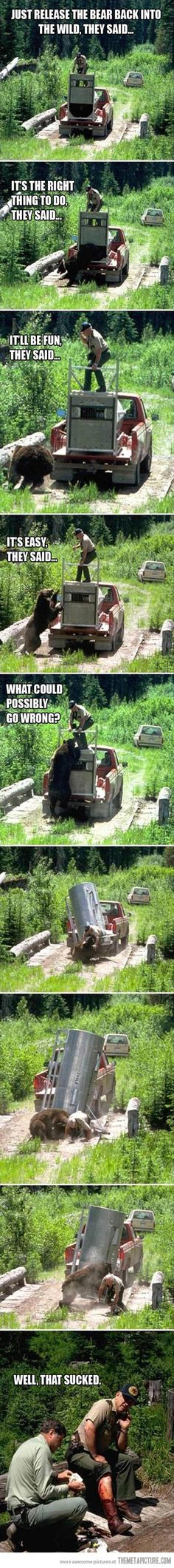Funny pictures about Just letting the bear out. Oh, and cool pics about Just letting the bear out. Also, Just letting the bear out photos. Funny Pins, Funny Memes, Funny Stuff, Random Stuff, Scary Stuff, Funny Cartoons, Wtf Funny, Random Things, Animals