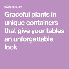 How can you get marriage or anniversary congrats from the white graceful plants in unique containers that give your tables an unforgettable look m4hsunfo Images