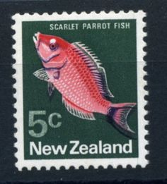 Scarlet parrot fish, New Zealand, 1970s